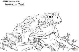 Nintendo Fait Une Révélation Troublante La Tête De Toad Nest Pas