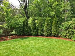 Backyard Trees - Home Deco Plans Garden Design With Backyard Landscaping Trees Backyard Fruit Trees In New Orleans Summer Green Thumb Images With Pnic Park Area Woods Table Stock Photo 32 Brilliant Tree Ideas Landscaping Waterfall Pond Stock Photo For The Ipirations Shejunks Backyards Terrific 31 Good Evergreen Splendid Grass Scenic Touch Forest Monochrome Sumrtime Decorating Bird Bath Fountain And Lattice Large And Beautiful Photos To Select Best For