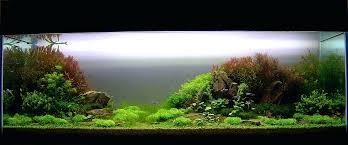 Aquascaping Forum Interview With Appartment Aquascaping Forum ... 329 Best Aquascape Images On Pinterest Aquarium Ideas Floratic Visiting Paradise At Shah Alam Planted Aquarium Aquascape Things Aquariums Aquascaping Malaysia Diy Pertama Kali Aquascaping October 2010 Of The Month Ikebana Aquascaping World Sumida Aquarium Reloaded Fish Tanks And Designs Awesome A Moss Experiment Its All About Current Low Tech Tank Cuisine Wonderful Small Cubical Styles Planted The Surreal Submarine Amuse