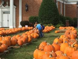 Mayfield Pumpkin Patch by Greensboro Daily Photo Fundraiser