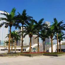 prix des palmiers exterieur promotion palmier extérieur acheter des palmier extérieur