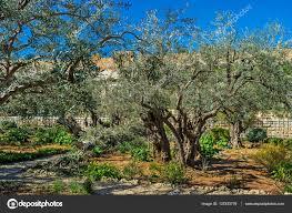The old olive garden — Stock © efesenko