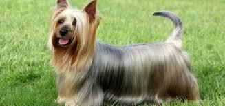 what large dog breeds dont shed 2017 dagdogbreeds