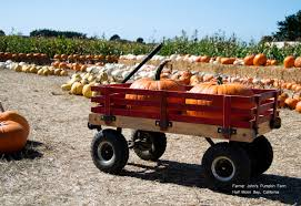 Half Moon Bay Pumpkin Patch by From Haunted Houses To Mazes A Snapshot Of Upcoming Halloween