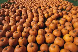 Best Halloween Attractions In Michigan by Things To Do For Halloween In Detroit Michigan