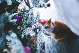 Are Christmas Tree Needles Toxic To Dogs by Enjoy A Purrfect Pet Friendly Christmas Zarastoneley Llm