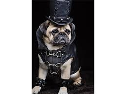 Other Names For Halloween by Pugs In Costume Cute Ideas For Your Dog On Halloween Reader U0027s