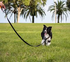 Amazon.com : 10 Foot Dog Leash With Padded Handle - Long Leash For ... Do Female Dogs Get Periods How Often And Long Does The Period Dsc3763jpg The Best Retractable Dog Leash In 2017 Top 5 Leashes Compared Please Fence Me In Westward Ho To Seattle Traing Talk Teaching Your Come When Called Steemit For Outside December Pet Collars Chains At Ace Hdware Biglarge Reviews Buyers Guide Amazoncom 10 Foot With Padded Handle For Itt A Long Term Version Of I Found A Rabbit Wat Do