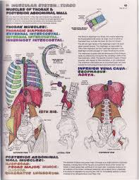 The Anatomy Coloring Book 4th Edition Epic Collection Of