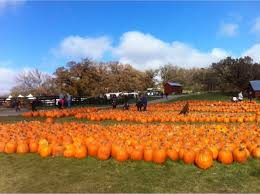 Pumpkin Patch Homer Glen Il by Family Farm Grundy County Illinois Pumpkin Patch