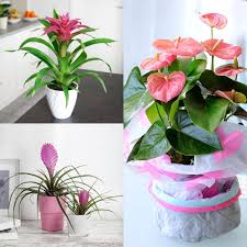 zimmerpflanzen set rosa wohnzimmer