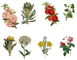 Vintage Flowers Set 3 PNG By Chaseandlinda