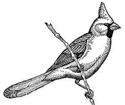 Cardinal Bird Coloring Page Singing On Tree Branch