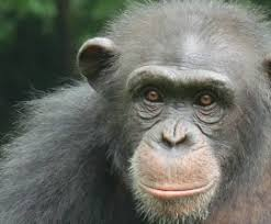 Ebola And Animals At Home West Africa A Humane Nation