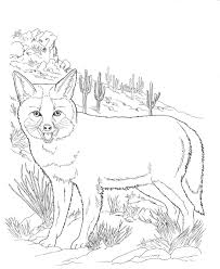 Desert Animals Coloring Pages North American Wildlife Of