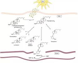 8 answers how to efficiently absorb the vitamin d from the sun