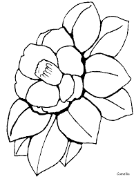 Camellia Flowers Coloring Pages