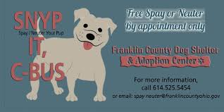 Small Non Shedding Dogs For Adoption by Franklin County Dog Shelter U0026 Adoption Center