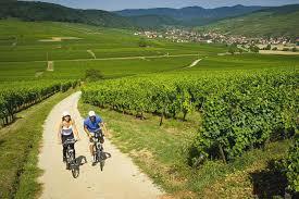 chambre d hote route des vins alsace visiter la route des vins d alsace à vélo tourisme alsace