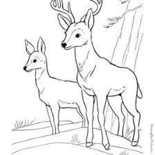 Printable Deer Coloring Pages AZ