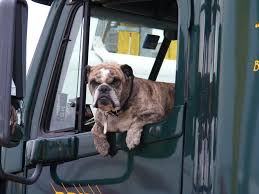 Free Images : Window, Cute, Canine, Transportation, Waiting, Pet ... Truck Dog Hire By Brancatella Brisbane Trailers Allquip Water Trucks Good Dogs Food Sits For Heights Brick Mortar Eater Houston The Public Houses Acvities Of In Aldgate E1 1lx Union Dog Onsite Old Bust Head Filetip Truck And Quad Dog Trailerjpg Wikimedia Commons Animal Transport Solution With Ramp For Diy Storage Part 1 Poting Yard Bojeremyeatonco Driving A Behind The Steering Wheel Of Lorry Stock My Adventures Racing Sled 44 Toyota Daily Richmond Sand Gravel Landscaping