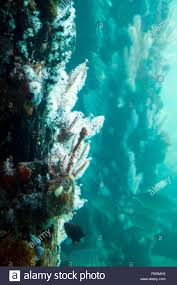 100 Dmh Australia Busselton Fish Corals And Sponges On The Jetty