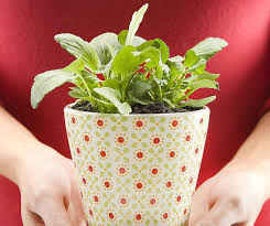 Plants For Bathroom Feng Shui by Plants In Bedroom Feng Shui Moncler Factory Outlets Com