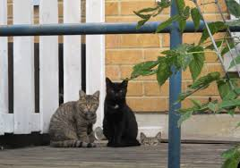 cats on deck toronto s expanded spay neuter service is a well kept secret the