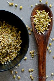 Sprouting Pumpkin Seeds by How To Sprout Lentils And Other Legumes My Food Odyssey
