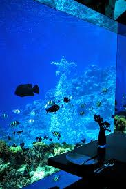 100 Anantara Kihavah Maldives Villas Unveils Its Annual Underwater Coral