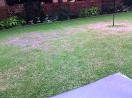 Dog Friendly Landscaping Inspiration — WEDGELOG Design Easy Backyard Landscape Design Ideas Triyae Various Outdoor Lawn And Garden Best No Grass Yard On Pinterest Dog Friendly Backyards Amazing 42 Landscaping Small Simple Inspiring Patio A Budget With Cozy Look For Dogs Sunset Prescott Your Appmon Front Compact English