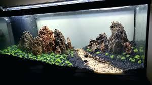 large aquarium rocks for sale large aquarium driftwood this gallon tank is set up with