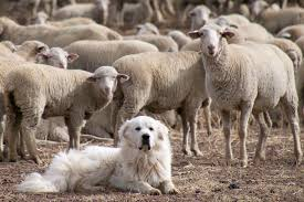 Top 10 Dogs That Dont Shed by Clean Bill Of Health Top 10 Healthiest Dog Breeds Good Guard Dogs