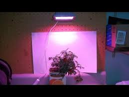 testing the acke 24watt led grow light for cloning and ripening