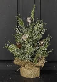 Snowy Herb Pine Twig Tree
