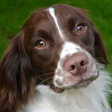 dogs that shed the least 5 breeds