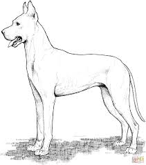 Great Dane Coloring Page Pages Of Realistic Dogs Printable Dog