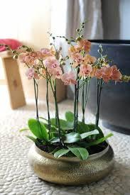 les 25 meilleures idées de la catégorie orchidées sur