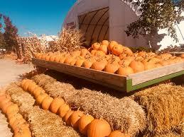 Jumbos Pumpkin Patch Groupon by Fawn U0027s Fall Fest U0026 Pumpkin Farm Home Facebook