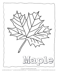 Maple Leaf Coloring Pages Printable Collection Wonderweirded Wildlife Free