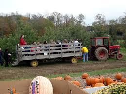 Pumpkin Picking In Waterbury Ct pumpkin patch u0026 hayride at norton brothers farm in cheshire ct