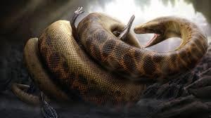 python frisst stachelschwein und stirbt python died after