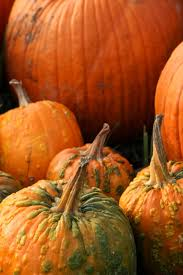 Apple Pumpkin Picking Syracuse Ny by Photo Gallery Will U0027s Cackleberry Castle Pumpkin Farm Syracuse