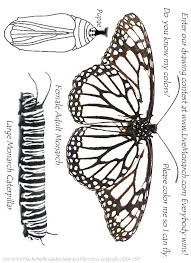 Monarch Caterpillar Coloring Page Butterfly Print Color Me In So I Can Free Cheer Pages
