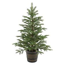 Unlit Christmas Trees Sears by Right Now You An Get A Great Deal On The 6foot Alberta Spruce