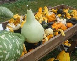 Best Pumpkin Patch Des Moines by Find Pumpkin Patches In Iowa Pick Your Own Pumpkins Halloween