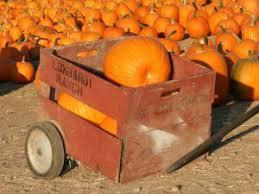Pumpkin Patch Near Santa Clarita Ca by Halloween Harvest Fun In Southern California U0026 Los Angeles