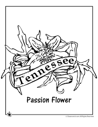 State Flower Coloring Pages Tennessee Page Classroom Jr