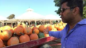 Pumpkin Patch Long Island Ny by Pumpkin Picking At Harbes Family Farm Long Island Youtube