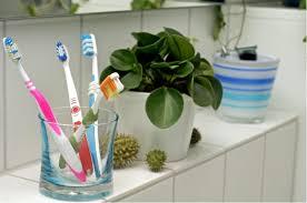 pflanzen fürs bad frisches grün für die wellnessoase